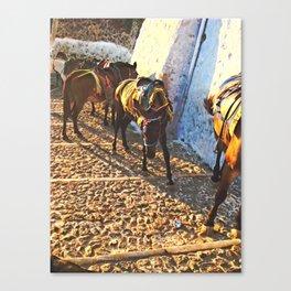 Donkeys Santorini 2 Canvas Print