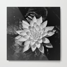 Water Lily in Black and White from Overhead Metal Print