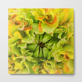 Pon Pon Trilly Ranunculus Metal Print