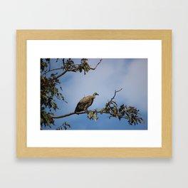 Observant Vultures Framed Art Print