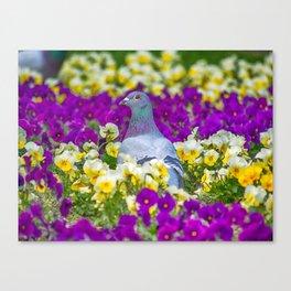 Pigeon and Pansies Canvas Print