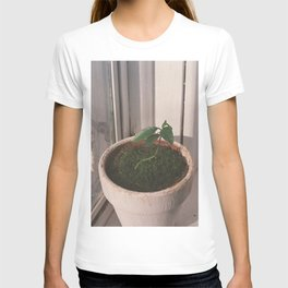kumquat seedling 2017 T-shirt