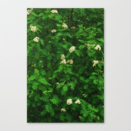 Greenery II Canvas Print