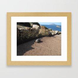 Grecian Turtle Framed Art Print