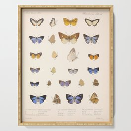 Vintage Hand Drawn Scientific Illustration Insects Butterfly Anatomy Colorful Wings Serving Tray