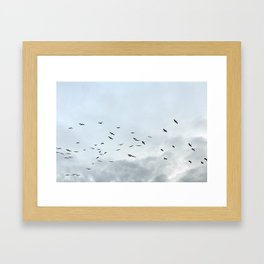 Pelicans Framed Art Print