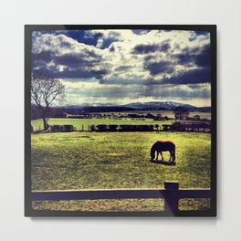 horse in field Metal Print
