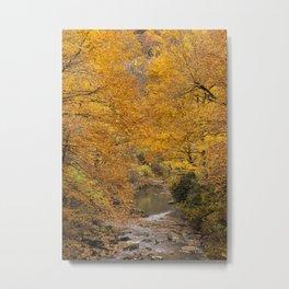 Fall is Golden Metal Print