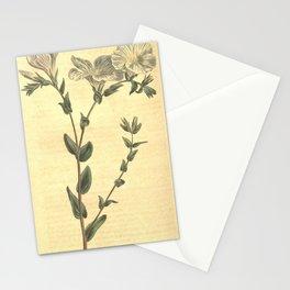 Flower 1087 linum ascyrifolium Blue and White Flax10 Stationery Cards