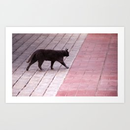 Cat Walking  6589 Art Print