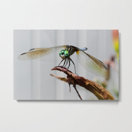 Dragonfly on Twig Metal Print