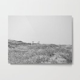 LITTLE ELKS / Inverness, CA Metal Print