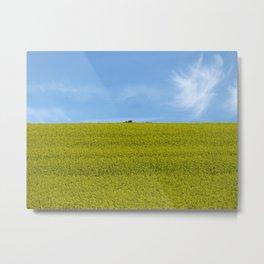 Canola Flower Field in Spring Landscape, South Africa Metal Print