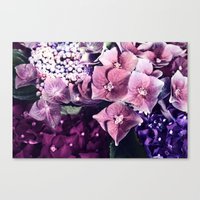 hydrangea Canvas Prints featuring Hydrangea  by Truly Juel