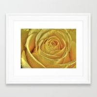 rose gold Framed Art Prints featuring Gold Rose by Tracy66