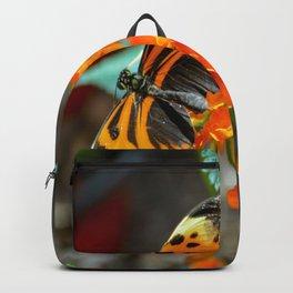 Numata Longwing Butterfly Backpack