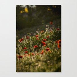 Virágágy Canvas Print