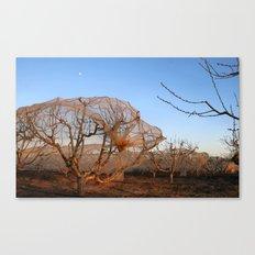 Moon over peach trees Canvas Print