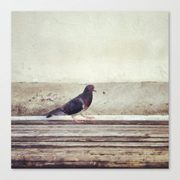 Bird Walk Canvas Print