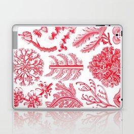 Ernst Haeckel Florideae Red Algae Laptop & iPad Skin