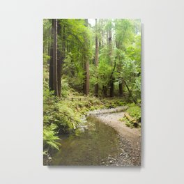 Muir Woods Creek Metal Print