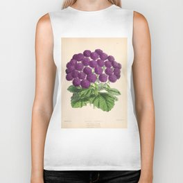 Double Cineraria Original hand-coloured print drawn and lithographed by Fitch Biker Tank