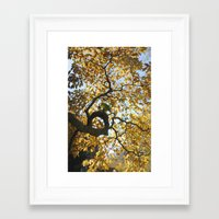 black and gold Framed Art Prints featuring Black & Gold by Max Ross