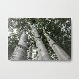 Birch Tree Forest By Magda Opoka Metal Print