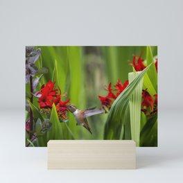 Rufous Hummingbird Feeding, No. 3 Mini Art Print