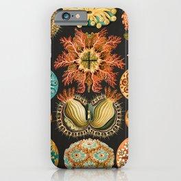 Ernst Haeckel Sea Squirts Illustration, 1904 iPhone Case