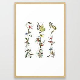 Birds - Art - Vintage - Pattern - Illustration - Nature Framed Art Print