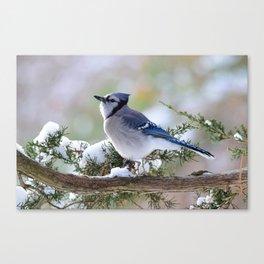 Look Skyward Blue Jay Canvas Print