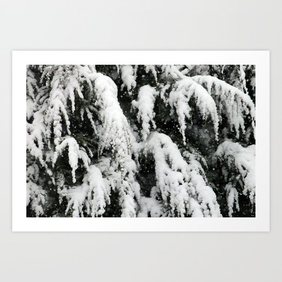 Fresh Snow on Pines Art Print