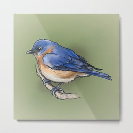 bluebird. Metal Print