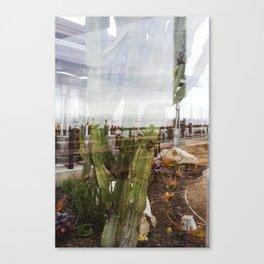 Cactus Ocean Abstraction Canvas Print