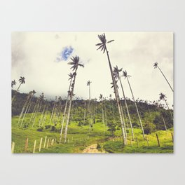 Wax Palms Tower over Cocora Valley Fine Art Print Canvas Print