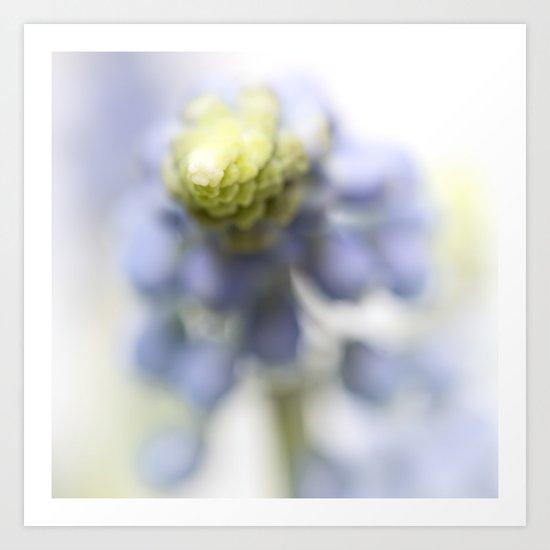 Grape Hyacinth III (abstraction) Art Print