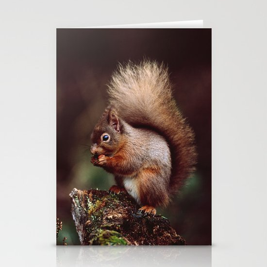 RED SQUIRREL. Stationery Cards