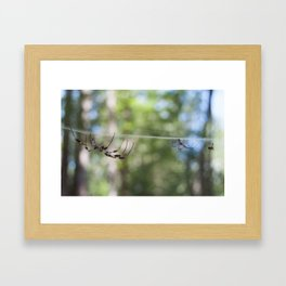 Spider 1 | Picture C Framed Art Print