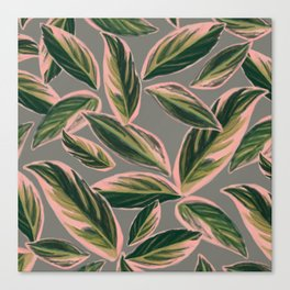 Calathea Leaves Pattern- Pink Green Gray Canvas Print