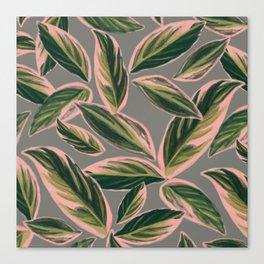 Calathea Leaves Pattern- Pink Green Gray Canvas Print