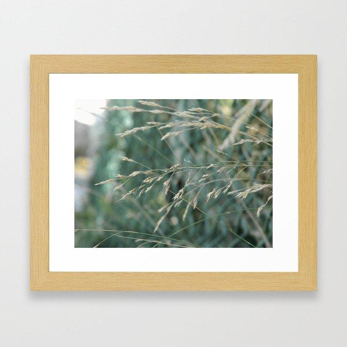 Soft Grass Framed Art Print