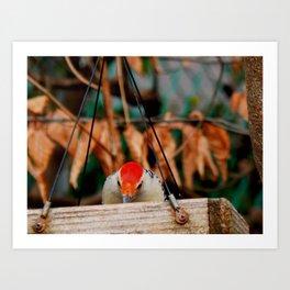 Woodpecker time! Art Print