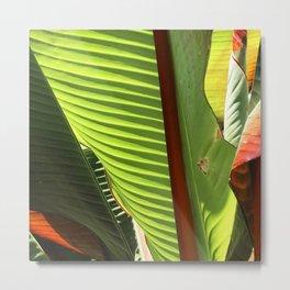 Avant-Garde Banana Palm Leaves Fine Art Photo Metal Print