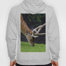 Fallow Deer Hoody
