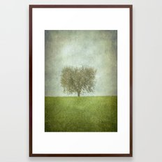 The Lone Olive Tree Framed Art Print