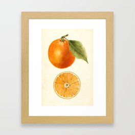 Vintage Painting of an Orange Framed Art Print