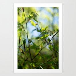 Green Blue Sky Art Print