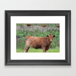 New Mexican Cow  Framed Art Print
