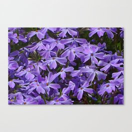 Bursting With Color Canvas Print